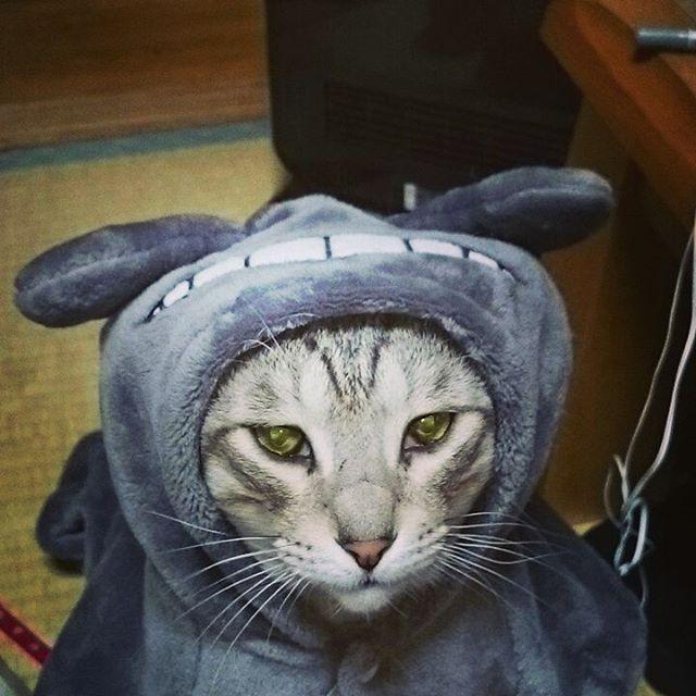 あいかわらず猫ネタ。。。嫌いなのにこの寒さに負けて着てます。 - from Instagram