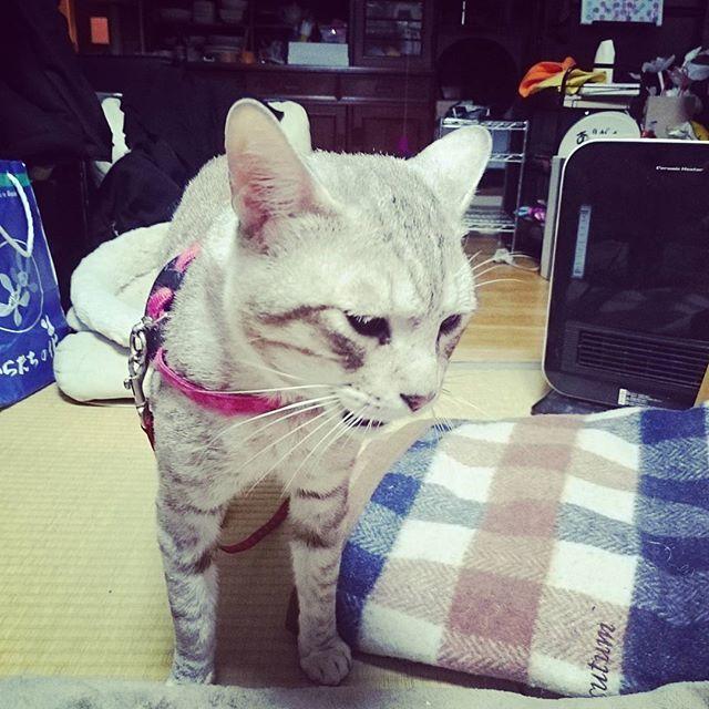夜食後、ごちそうさんでした。#ねこ部 ネコ #cat - from Instagram