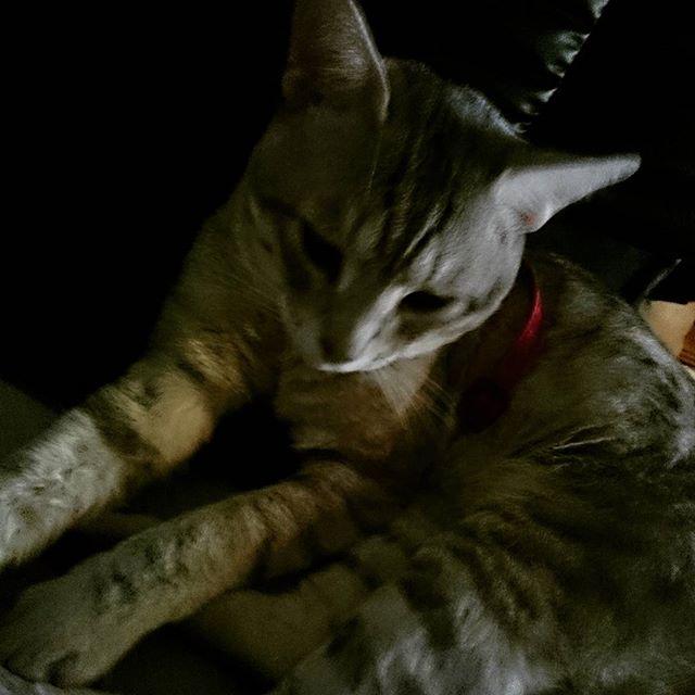 今日は妙に静か  なんか不安 #ねこ部#ねこ #cat - from Instagram