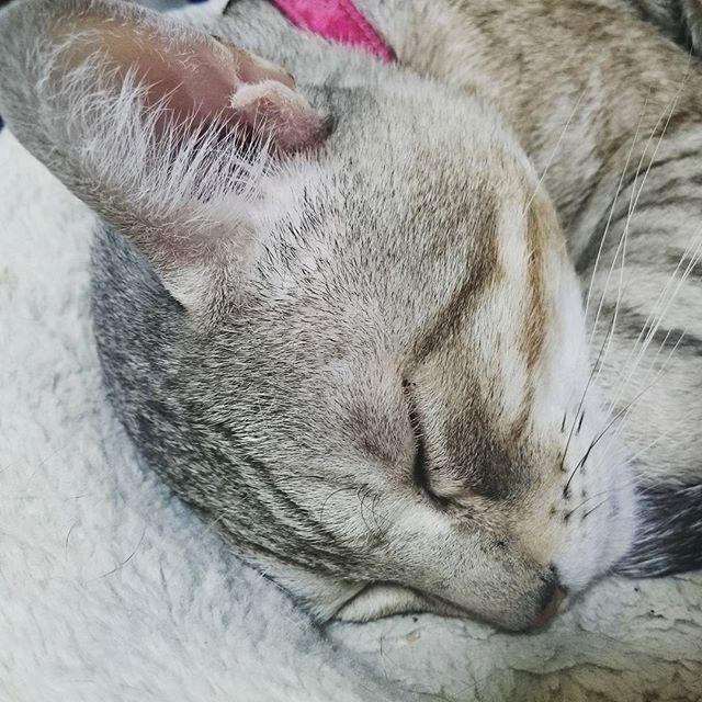 爆睡 #ねこ部 #ねこ #cat - from Instagram