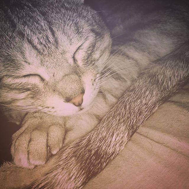 お休みなさい #ねこ部 #ねこ #cat - from Instagram