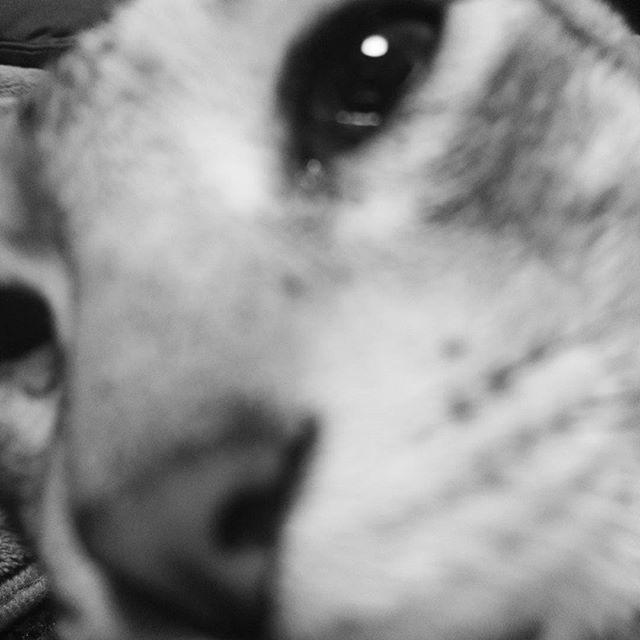 アップ #ねこ部 #ねこ#cat - from Instagram