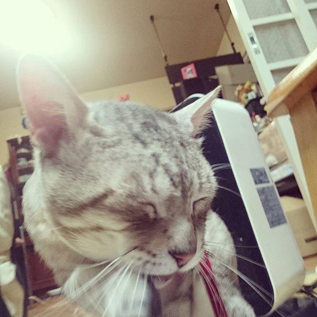 洗顔は入念に #ねこ部 #ネコ #cat - from Instagram
