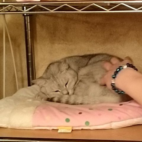 行き付け #ねこ部 #ネコ#cat - from Instagram