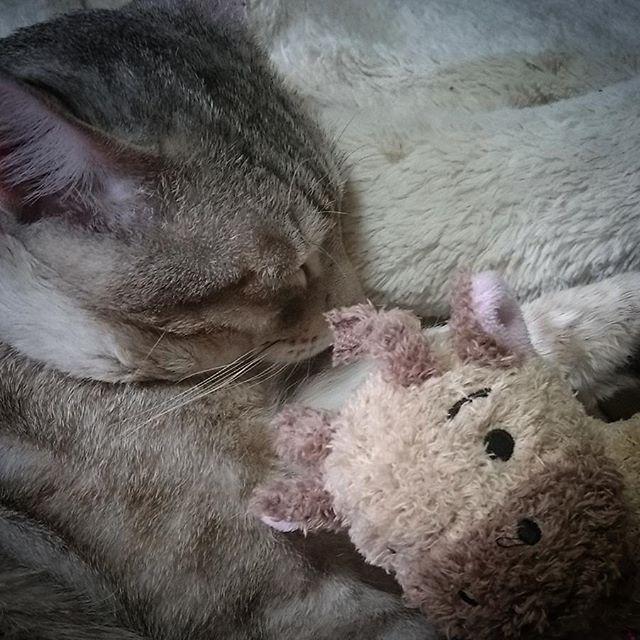 外泊でお疲れみたい #ねこ部 #ネコ #cat#オツカレ - from Instagram