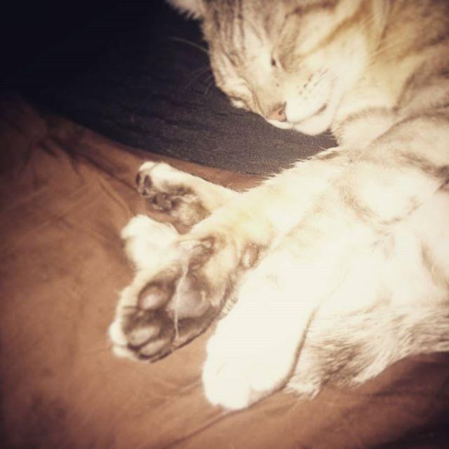 爆睡の肉球 #ねこ部 #ねこ #cat #オヤスミ #ユメ - from Instagram