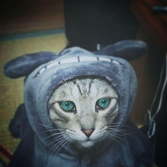 #ねこ部 #ねこ #猫 #cat #catoftheday #きじ猫 - from Instagram