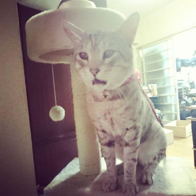 なんせよく鳴く #ねこ部 #ねこ #きじ猫 #ペコねこ部 #catstagram #cat#ネコ - from Instagram