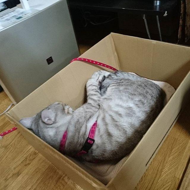 本日は、別荘生活 #ねこ部 #ねこ #ネコ #キジネコ #cat #catstagram #ペコねこ部 - from Instagram