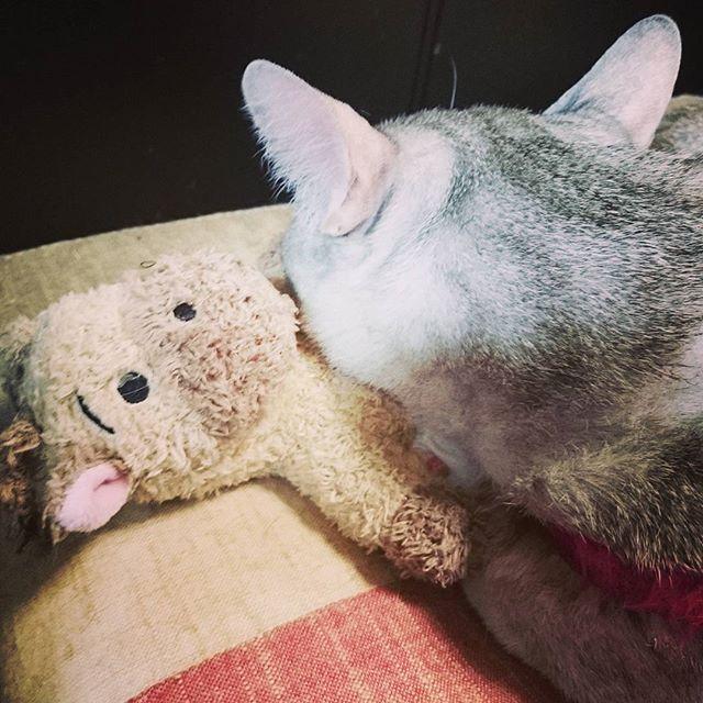ほんとに、ぬいぐるみ好きなんかね? #ねこ部 #ねこ #cat #catoftheday #kitty - from Instagram