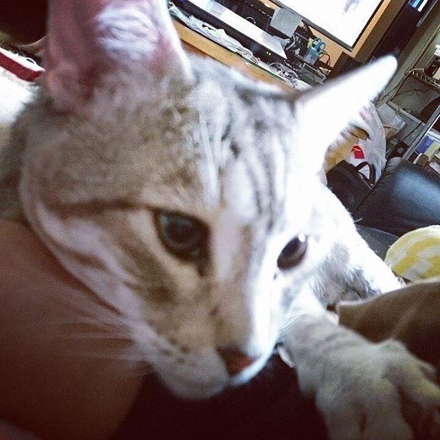 なんで腕枕なん? #ねこ #ねこ部 #きじねこ #catstagram #cat - from Instagram