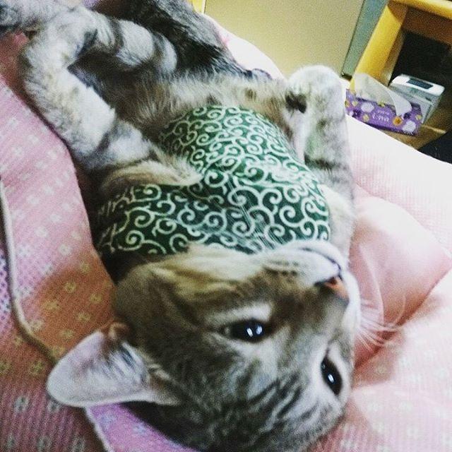 気持ちよさそうやな、こいつ #ねこ部 #ねこ #catstagram #cat - from Instagram