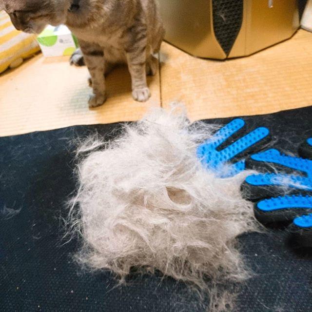 ペットグローブ買って使ってみた️評価通り、ヤバイね、これ大満足️ #ねこ #ねこすたぐらむ #ねこ部 #きじねこ #catstagram #cat #catlife - from Instagram